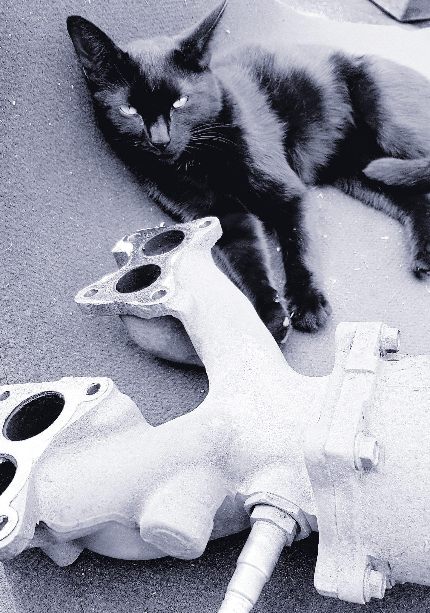 SCRAP CATS @ SCRAPPIE.CO.UK